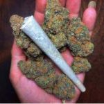 Buy Top Quality Marijuana Strains Online