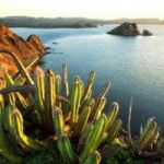 Flights from Dallas to San Francisco at lowest price