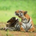 ONLINE SAFARI BOOKING TADOBA